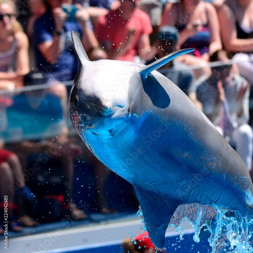 Stampa su Tela Close up of a dolphin jumping out of the water during a dolphin show