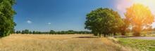Getreidefeld Reif Im Sonnensch...