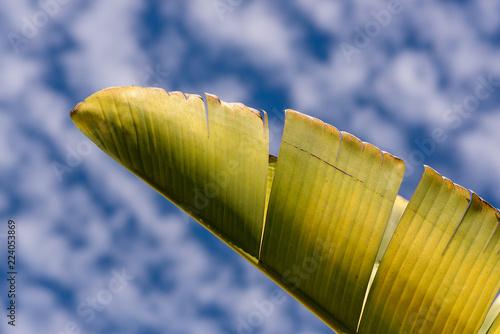 Fényképezés  leaf and cloudy sky