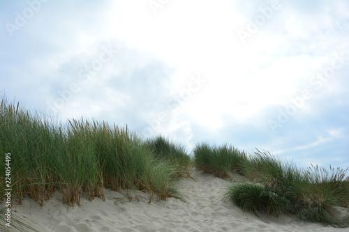 Fototapeten Nordsee Sand Dünen mit Strandhafer an der Nordsee mit Sonne und viel Himmel
