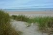 Strandhafer in den Sanddünen an der Nordseeküste mit blauem Himmel