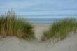 Blick durch den Strandhafer in den Dünen zur Nordsee in den Niederlanden auf Zeeland