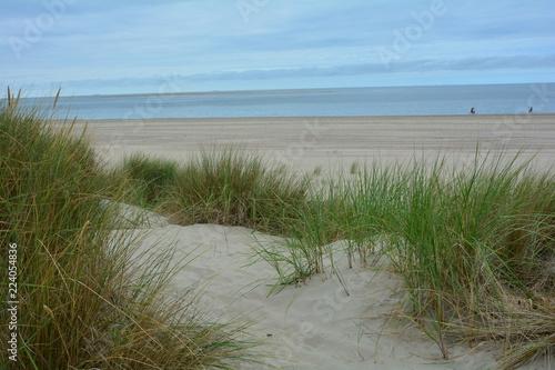 Spoed Foto op Canvas Noordzee Strandhafer in den Sanddünen an der Nordseeküste mit blauem Himmel