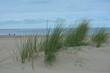 Dünengras mit viel Sand an der Nordsee, mit Meer und blauem Himmel. Menschen laufen in weiter Ferne am Strand entlang