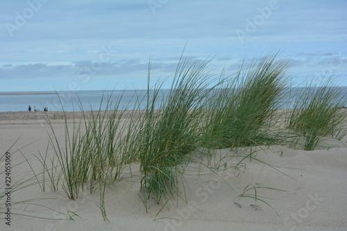 Poster Gris Dünengras mit viel Sand an der Nordsee, mit Meer und blauem Himmel. Menschen laufen in weiter Ferne am Strand entlang