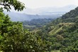 Urwald vor Santa Marta - Kolumbien