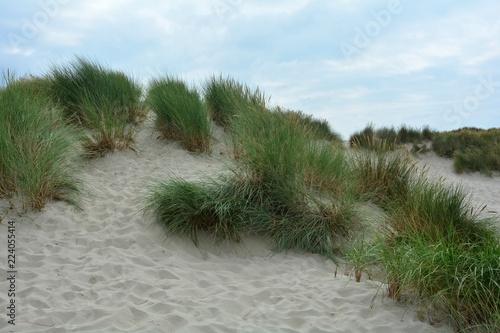 Dünenlandschaft mit Strandhafer an der Nordsee in den Niederlanden