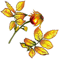 Vector autumn yellow rose hip leaves. Leaf plant botanical garden floral foliage. Isolated illustration element. Vector leaf for background, texture, wrapper pattern, frame or border.