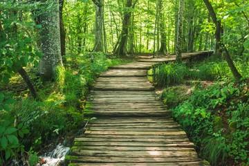 FototapetaForest road in Plitvice National Park