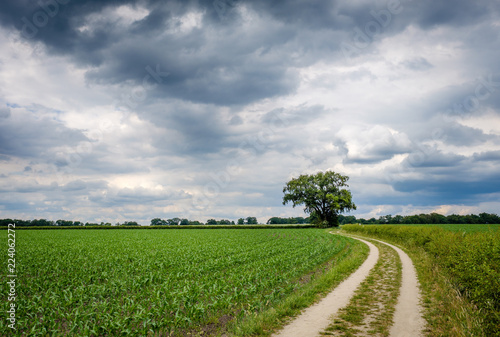 Poster Donkergrijs It is a cloudy day and rain isn't far away on this summer day in June on the so-called 'Deldener Es' near the small city of Delden in a region called Twente, located in the province of Overijssel