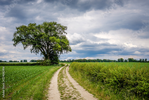 It is a cloudy day and rain isn't far away on this summer day in June on the so-called 'Deldener Es' near the small city of Delden in a region called Twente, located in the province of Overijssel
