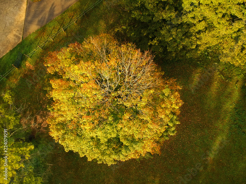 aerial drone view of fall autumn leaf foliage on a hardwood tree