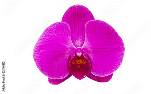 Foto op Aluminium Orchidee Pink orchid flower isolate on white background