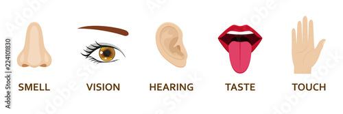Foto Five human senses icons set