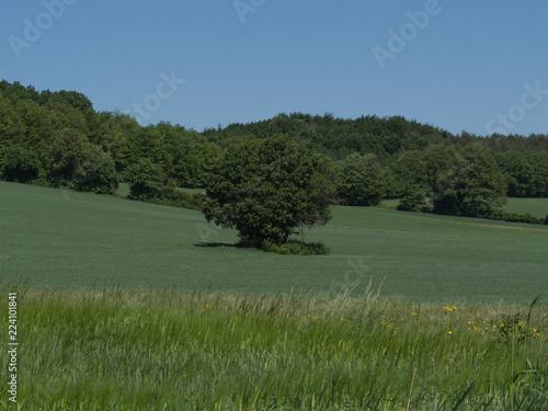 Fotobehang Landschap Landscape single tree