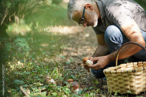 Carta da parati Man in hood picking ceps mushrooms