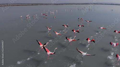 Beautiful flamingos birds in lake water. Spain