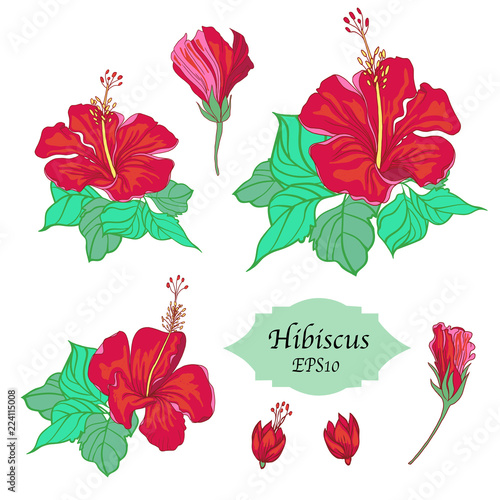 Bundle Of Hand Drawn Hibiscus Templates Isolated On White Background