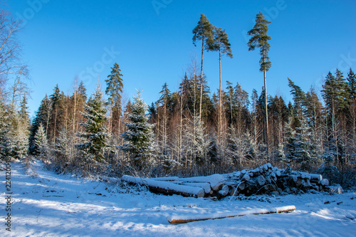 Fotobehang Blauwe jeans snowy winter countryside scene with snow and frozen trees