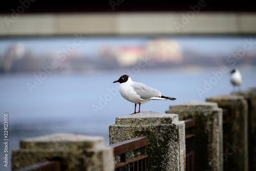 seagull sitting on the rails of bridge