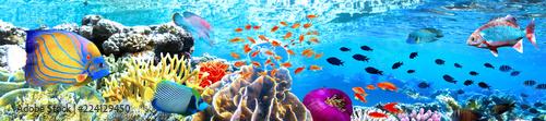 obraz PCV Panoramik Akvaryum ve Balıklar