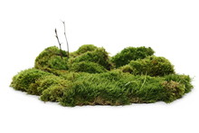 Green Moss With Twigs Isolated On White Background