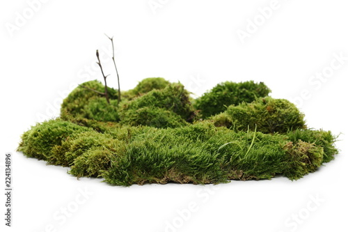 Fotografía Green moss with twigs isolated on white background