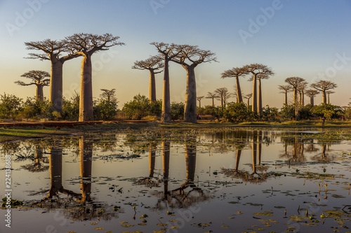 In de dag Baobab Baobab alley in the morning, Madagascar