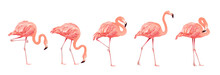 Pink Flamingo Bird Set Tropica...