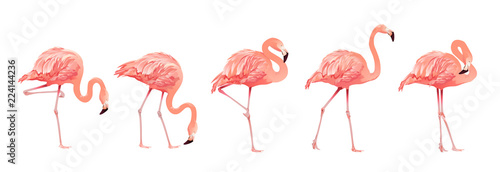 Photo Pink Flamingo Bird Set Tropical Wild Beautiful Exotic Symbol Flat Design Style Isolated on White Background