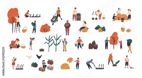 Fototapeta Crowd of tiny people gathering crops or seasonal harvest. Bundle of men and women collecting ripe fruits, berries and vegetables isolated on white background. Flat cartoon vector illustration. obraz