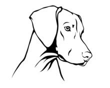 Magyar Vizsla - Ungarischer Vorstehhund