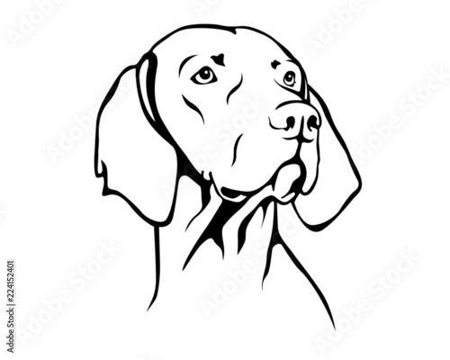 Leinwand Poster Magyar Vizsla - Ungarischer Vorstehhund