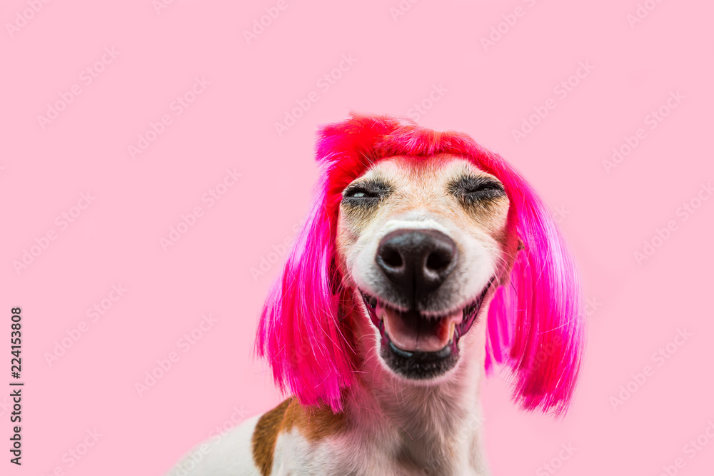 Happy adorable smiling dog in pink wig. satisfied laughing pet face