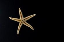 Close Up Of A Yellow Starfish ...