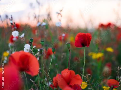 Wildflowers field sunset