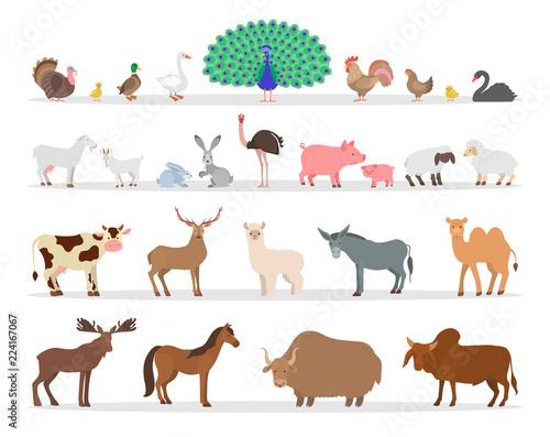 Leinwand Poster Farm animal and bird set. Duck and sheep