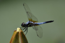 Dragonfly China