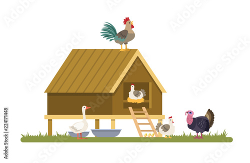 Domestic birds on the farm or village.