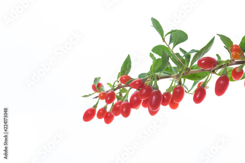 Obraz red ripe goji berry on a branch isolated on a white - fototapety do salonu