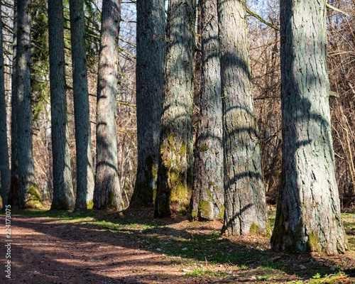 Papiers peints Cappuccino old road in forest in springtime