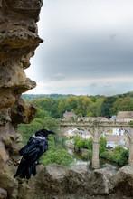 Raven On Ruined Stone Wall Overlooking Knaresborough Town