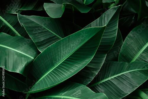 ciemnozielone-liscie-bananowca-tropikalnego-teksturowane