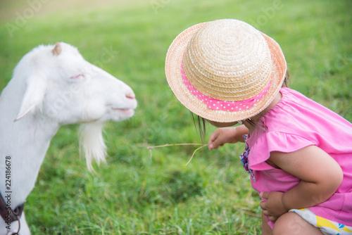 Fotografie, Obraz  動物と遊ぶ子供