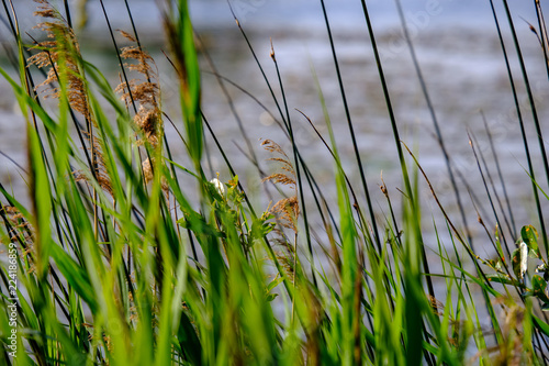 Spoed Foto op Canvas Natuur water grass and bents in summer on a blur background on the lake shore
