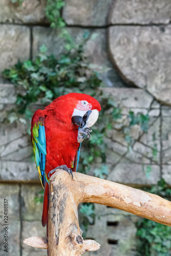 Foto op Aluminium Papegaai portrait of a red parrot in a zoo