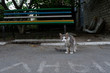 Street cat near a colorful bench