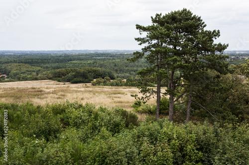 landscape in jylland, denmark