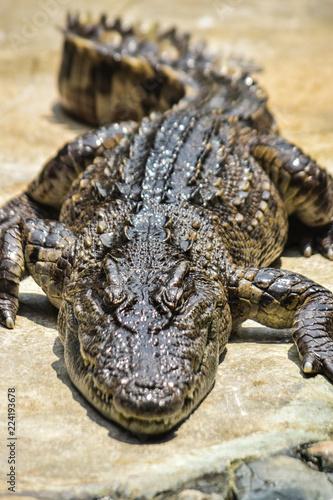 Foto op Plexiglas Krokodil Crocodile farm
