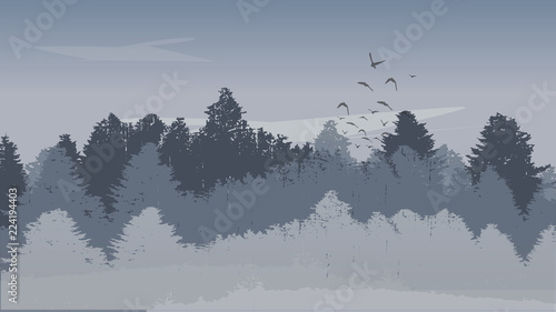 Beutiful Winter Landscape Background with Winter Colored Pine Tree Forest and Ascending Birds. Vector Illustration.
